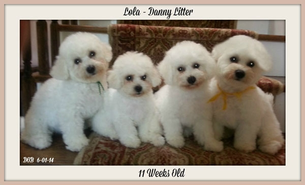 Pups aged 5 weeks