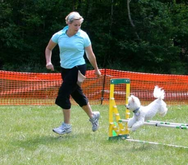 Sofia competing in Level one agility.