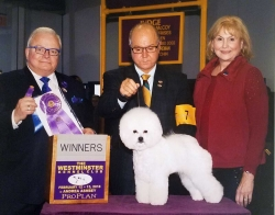 Dasha gets Win at Westminister Dog Show