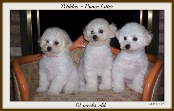 Pebbles and Prince Pups