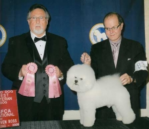 Best veteran best stud dog 2009 Bichon frise national dog show.
