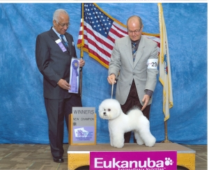 Best puppy in the show, at NY Bichon Frise Club Specialty.