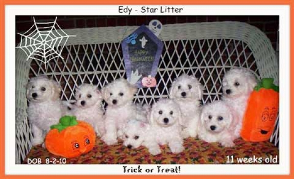 Edy - star litter