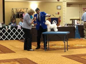 High Honor of Judging Puppy Sweepstakes