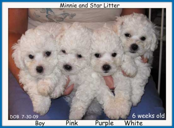 Minie and Star Litter
