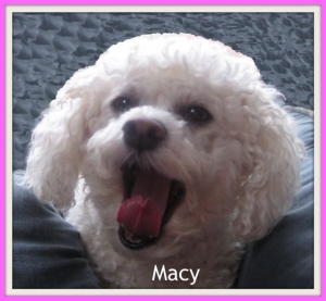 Macy Sept.13, 2000 to Dec 26, 2013