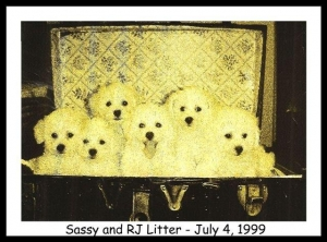 Emailing: Sassy and RJ Litter