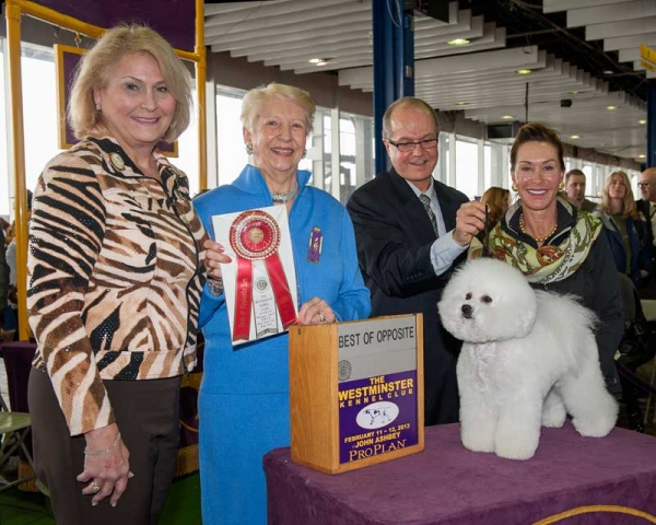 Isabella wins best opposite sex at prestigious Westminster Kennel Club dog show