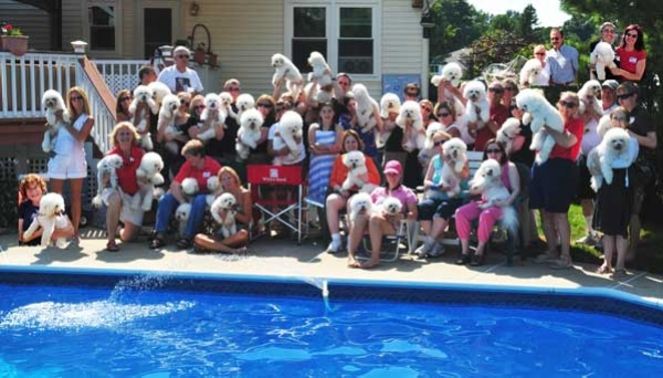 Bichon party 2011