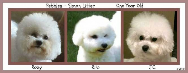 Simon and Pebbles litter age one year picture