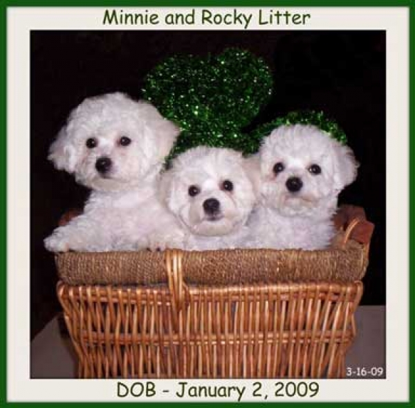 Minnie and Rocky's Litter