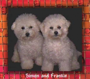 """Simon"" and ""Frankie"""