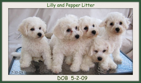 Lilly and Pepper Litter
